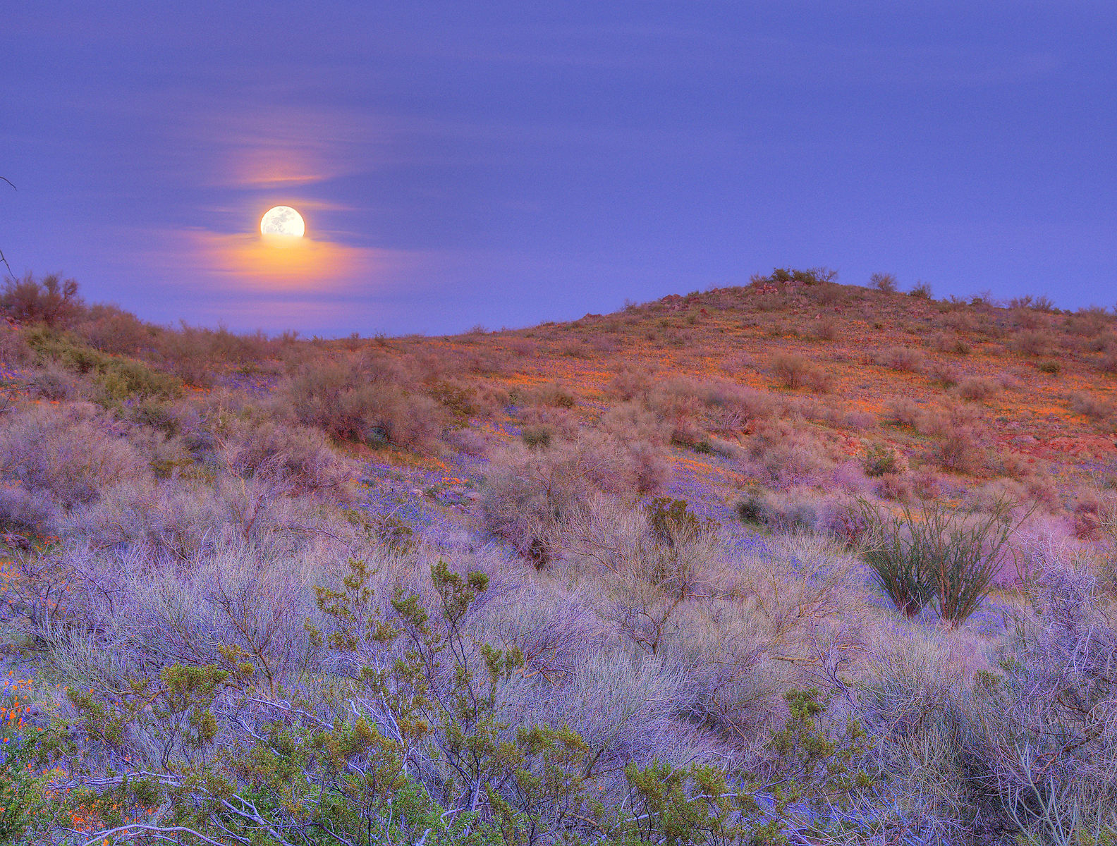 Desert landscape with a moon rising in a royal blue sky above purple, green, and salmon groundcover
